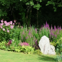 Bog garden with Filipendula and Lythrum