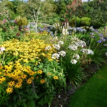 Rudbeckia and Agapanthus