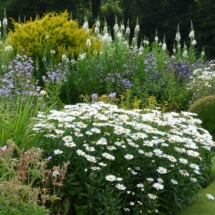 Square beds in July
